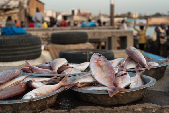Fish market in Dakar, Senegal