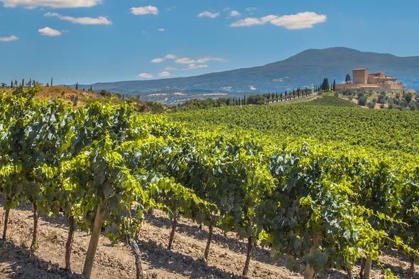 Vineyard near Bordeaux, France