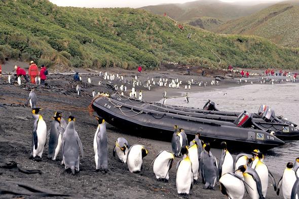 Exploring New Zealand's sub-Antarctic islands with Ponant