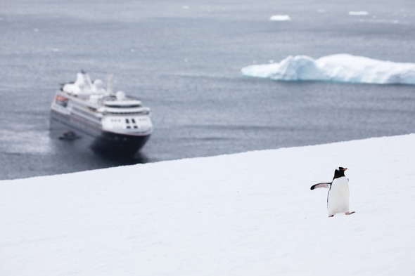 Silver Cloud - Penguin in Antarctica