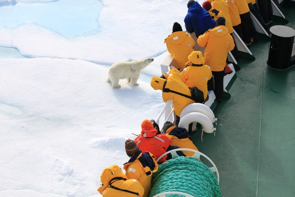 Quark Expeditions - Polar bear in Spitsbergen