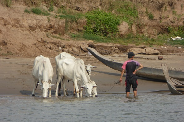 Life on the Mekong in Cambodia