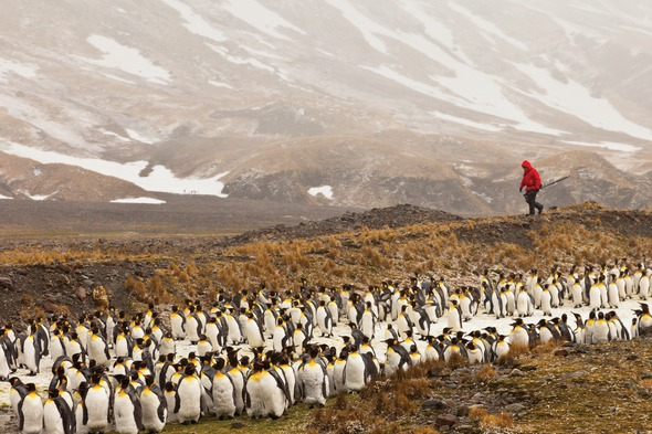 Lindblad Expeditions in South Georgia