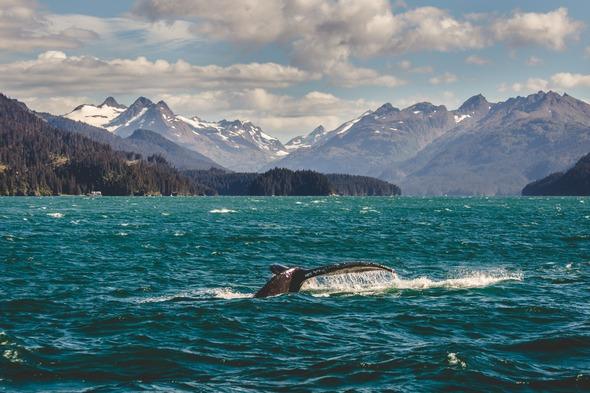 Wild Russia - Humpback Whale