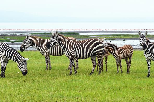safari so good