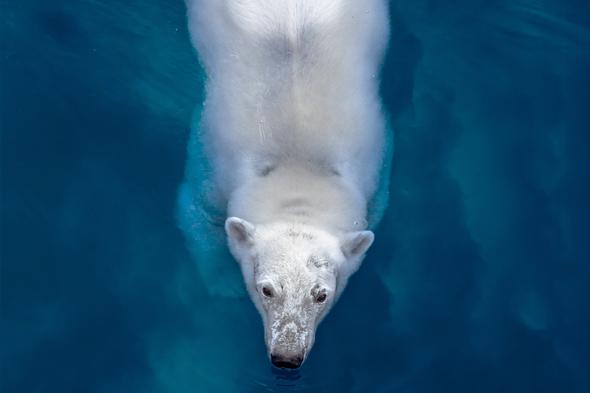 Off The Map magazine - Polar bear swimming