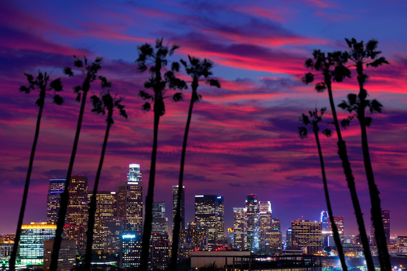 Los Angeles Evening Palms
