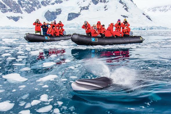 Expedition cruising - Lindblad in Antarctica