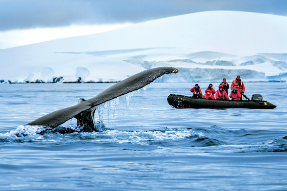 Ponant - Zodiac and whale in Antarctica