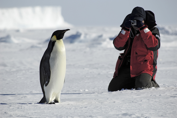 Photographing penguin in Antarctica