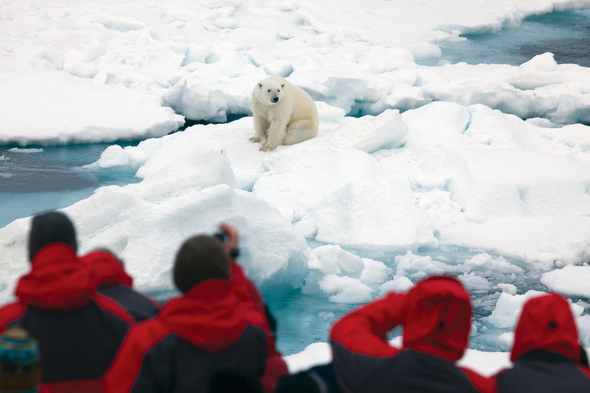 See polar bears in the wild on our pick of the best Arctic cruises