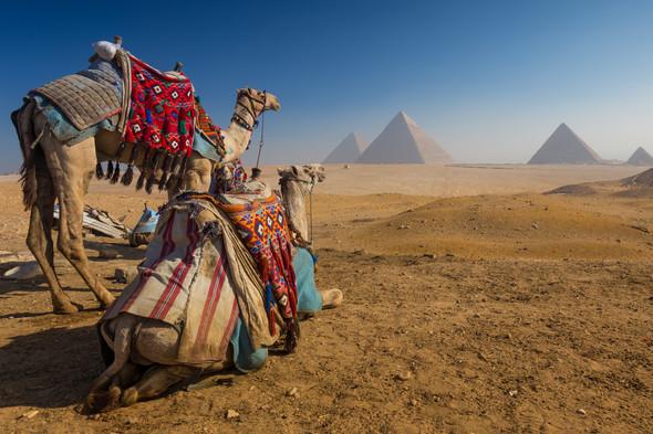 Camel and Pyramids near Cairo, Egypt