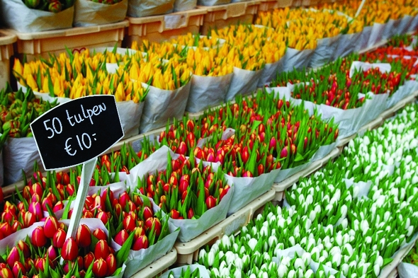 Flower market in Amsterdam, Netherlands
