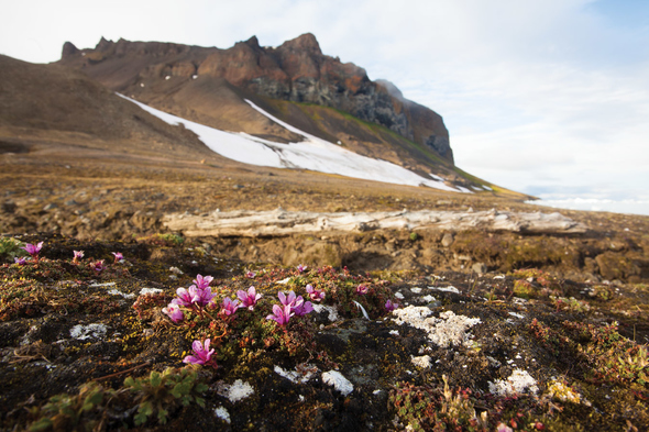 Franz Josef Land in the Russian Arctic