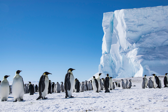 Emperor penguins on Coulman Island in the Ross Sea, Antarctica