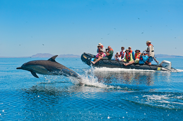 Dolphin and whale watching cruise with Lindblad Expeditions