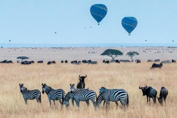 Hot air balloons over the Maasai Mara