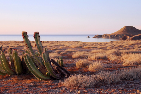 Cactus in the Sea of Cortez, Mexico