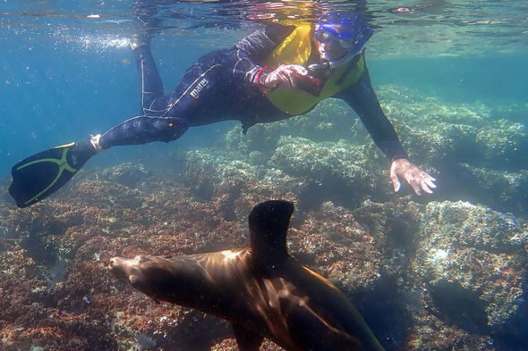 Snorkelling with sea lions in the Sea of Cortez, Mexico
