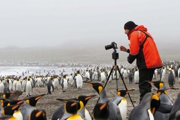 Photographer surrounded by king penguins in South Georgia