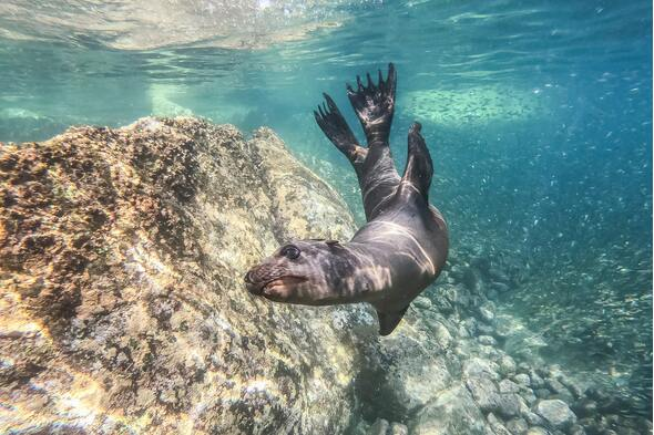 Sea lion in Baja California, Mexico