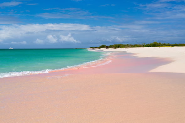 Pink sand beach in Barbuda