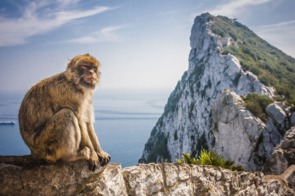 Monkey in Gibraltar