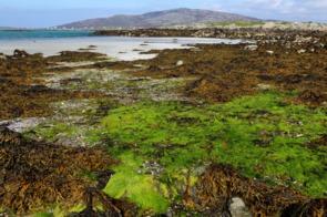 Beach on Eriskay, Outer Hebrides, Scotland