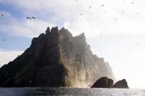 Gannets on St Kilda, Scotland