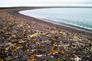 Stone beach, Saint Pierre & Miquelon
