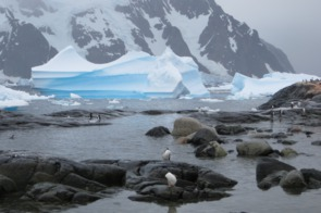 Penguins on Pléneau Island, Antarctica