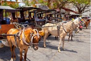 Horse-drawn carriages in Vigan, Philippines
