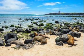 Fur seals on Punta Carola beach, San Cristóbal Island, Galapagos