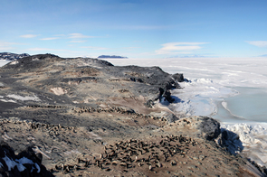 Adelie penguin rookery on Cape Royds, Antarctica