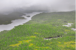 Forests near Prince Rupert, Canada