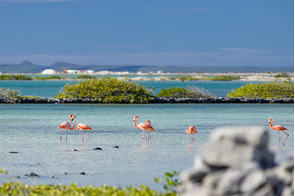Flamingos on the salt flats in Bonaire