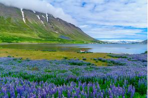 Landscape around Isafjordur, Iceland