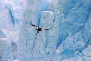 Condor Glacier, Chile