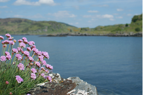 Flowers in Tayvallich, Scotland