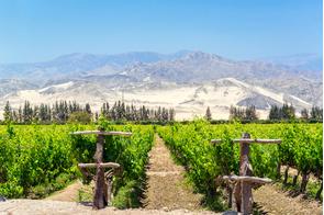 Vineyards in Pisco, Peru