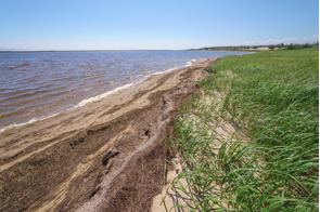 Piltun Bay, Sakhalin, Russia
