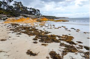 Flinders Island, Tasmania, Australia