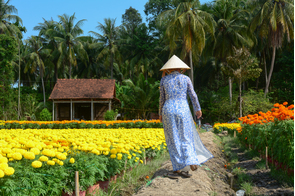 Flower plantation in Sa Dec, Vietnam