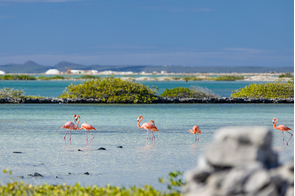 Flamingos on Bonaire