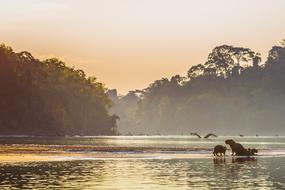 Amazon river cruises - Capybara in Manu National Park