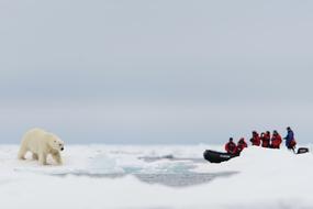 Arctic & Svalbard expedition cruises - Zodiac and polar bear