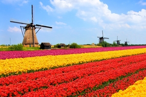 Spring cruises - Tulips in the Netherlands