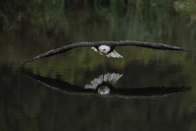 Alaska & Pacific Northwest expedition cruises - Bald eagle