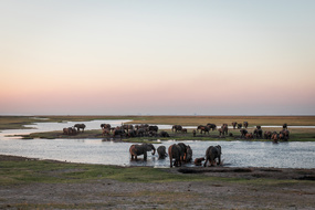 Chobe river cruise - Elephants in Botswana