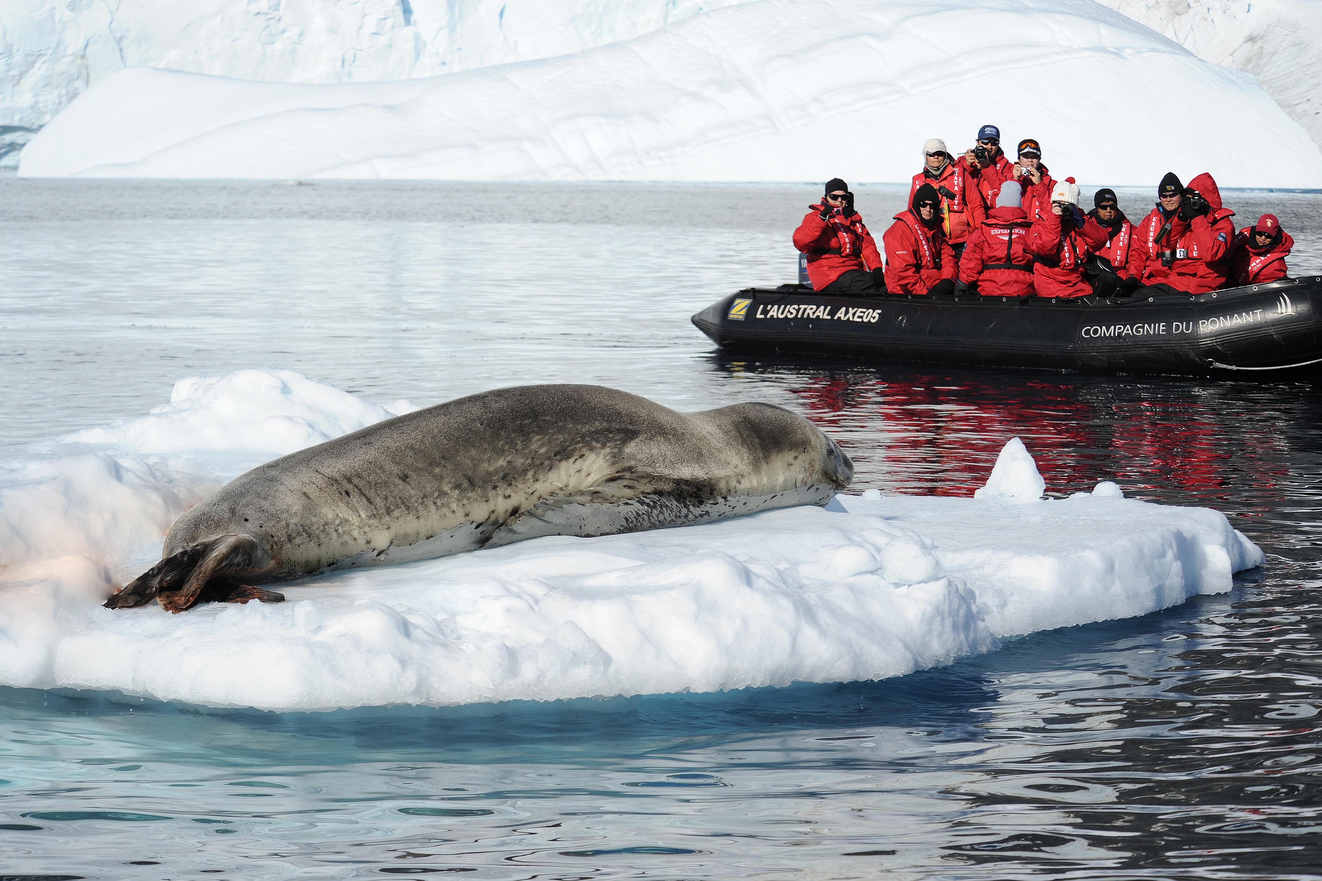 Ponant - L'Austral - Zodiac excursion in Antarctica